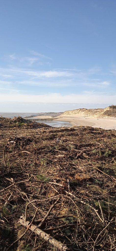 Le site du bois des sapins dans la baie d'Autre à Berck (Photo C.Deldalle)